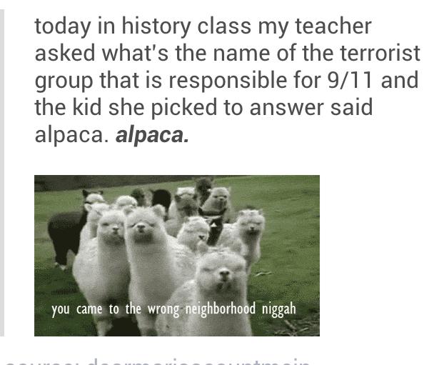 Alpacas did 9/11
