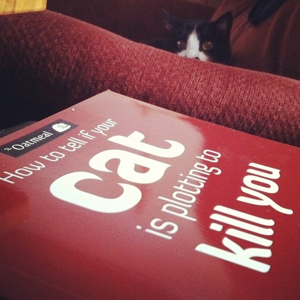book how to tell if your cat is plotting to kill you with cat in background