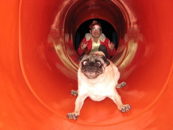 pug riding down a red slide looking like he immediately regrets the decision