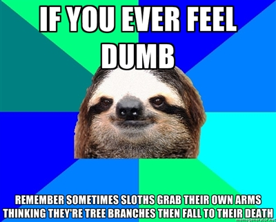 sloth meme if you ever feel dumb just remember that sloths sometimes grab their own arms thinking its a tree branch and fall to their deaths