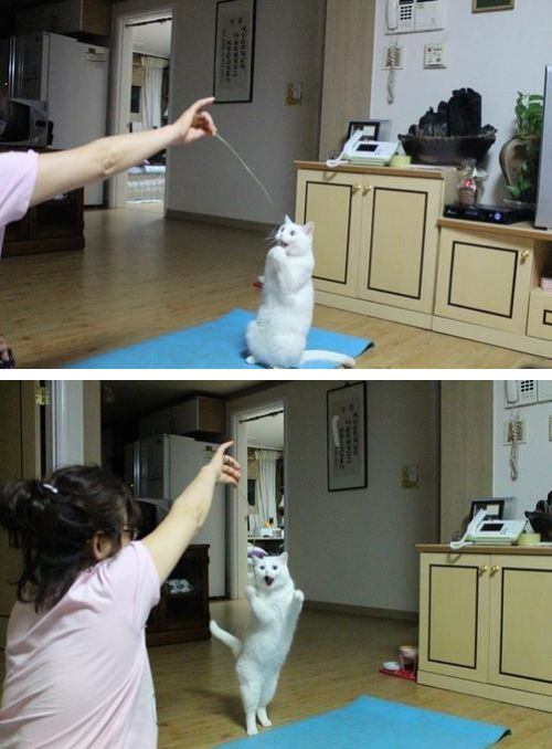 A cat gets very happy upon seeing a thread hanged up in the air by its owner.