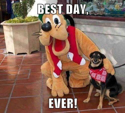 A dog visits disney land and takes a picture with goofy posing besides him. The dog is smiling in the picture.