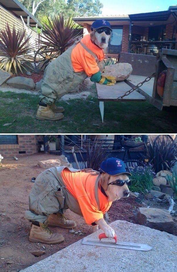 Dog dressed up with a hard hat and boots pretending to do construction work